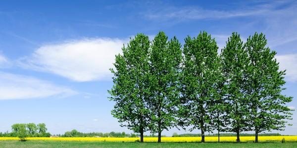 Certificazione rispetto ambientale